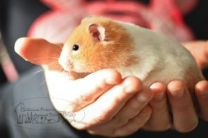 Person holding guinea pig